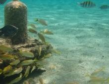Snorkel en Cozumel desde la playa